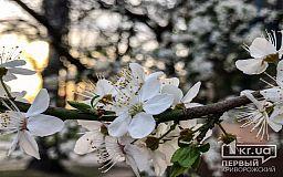 Какой будет погода в Кривом Роге 4 апреля и что советуют астрологи в этот день