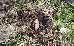 Мужчина, пасший скот в Криворожском районе, нашел гранату