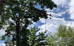 В Кривом Роге на проспекте ветром оборвало линии электропередач