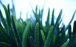 ТОП-5 самых неприхотливых комнатных растений, - подборка от «Первого Криворожского»