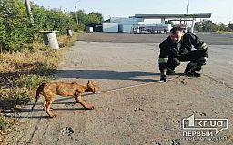 Криворожские пожарные спасли собаку, которая упала в яму