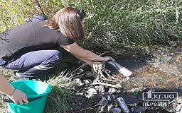 Гибель рыбы и несанкционированные утечки зафиксировала экоинспекция в криворожком пруду