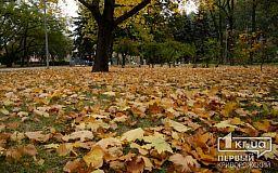 ТОП-5 причин не сжигать опавшие листья, - подборка от «Первого Криворожского»