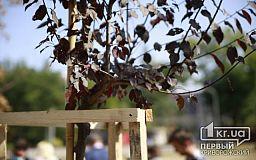 Большинство депутатов проигнорировало приглашение секретаря горсовета высадить деревья в криворожском парке