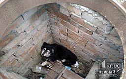 Криворожские пожарные спасли жизнь собаке, провалившейся в колодец