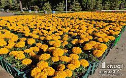 На криворожских цветочных часах высадили 22 тысячи цинерарий, петуний и тагетесов за 376 тысяч гривен