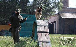Полоса препятствий и поиск взрывчатки: в Кривом Роге закончились сборы кинологов 21-й отдельной бригады
