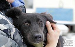 Ее пытались забросать камнями, но она выжила, - собака Тихоня ищет семью в Кривом Роге