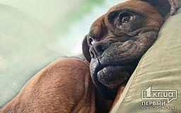 Босса из Кривого Рога забрали в семью из Центра обращения с животными