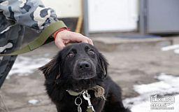 Собака Тихоня, которую криворожане пытались забросать камнями, нашла новую семью