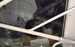 С Нового Года собака сидит взаперти в сельском продуктовом магазине под Кривым Рогом, - свидетели события