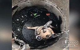 В Кривом Роге пожарные достали собаку из коммуникационного колодца