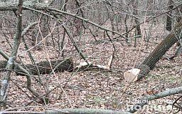 За сутки в Криворожском районе задержали двоих «черных лесорубов»