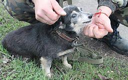 Еще две бездомные криворожские собаки нашли семью
