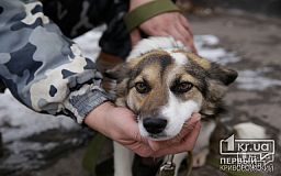 В криворожском Центре обращения с животными в 2019 году вакцинировали 1 742 собаки