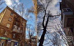Ждут трагедии: огромная ветка дерева повисла на крыше дома и проводах