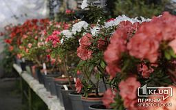 Более 80 сортов азалий цветут в криворожском ботаническом саду