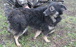 В Кривом Роге собака Пуговка ищет заботливую семью