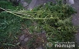 В Кривом Роге 51-летний мужчина выращивал коноплю