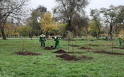 За деньги из городского бюджета высадили более 2000 растений