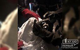 Спасатели выловили змею, которая заползла в подъезд многоэтажки