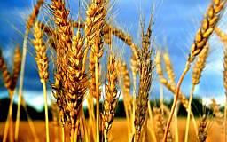 В Украине за этот год собрали рекордный урожай зерновых