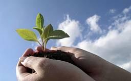 На улучшение экологии в Кривом Роге в текущем году направят свыше 32 миллионов гривен