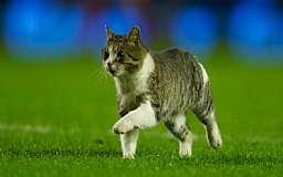 Энфилдский кот, остановивший футбольный матч, нашел себе место в приюте