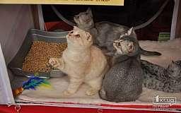 Сколько стоит в Кривом Роге приобретение породистого котенка?