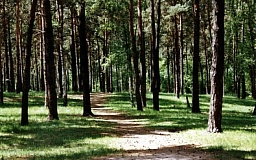 На сегодняшний день ведется патрулирование лесов Днепропетровщины