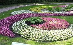 Цветоводческое мастерство школьниц из Кривого Рога отмечено призовым местом на Всеукраинском конкурсе «Цветущая Украина»