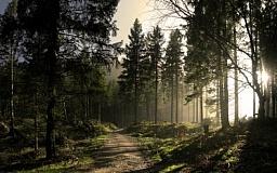 Из Украины будут вывозить больше древесины