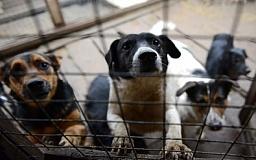В Кривом Роге начнут строить приют для животных