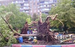 Непогода в Кривом Роге: Деревья падали в детских садах и на дороги