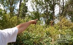«Первый Криворожский» выяснил кто и для чего проводит массовую вырубку деревьев в Кривом Роге