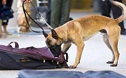 В Кривом Роге на площади Освобождения обнаружили подозрительную сумку