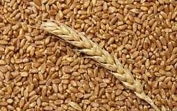 В Украине пропадет 15% сельскохозяйственной продукции, - эксперт
