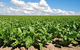 Дотации не спасут украинскую сахарную отрасль