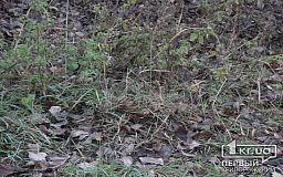 Тело человека, обглоданное собаками, нашли на кладбище в Кривом Роге