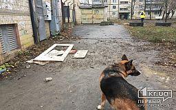 Куда звонить криворожанам, если по улицам бегают бездомные собаки (ОБНОВЛЕНО)