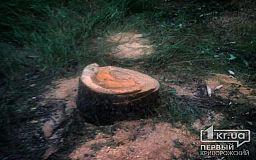 Криворожане пожаловались в полицию на вырубку деревьев