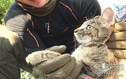 Криворожские экстремалы спасли кота, который залез на дерево