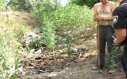 Криворожанин выращивал коноплю возле кладбища