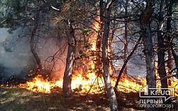 Из-за жары в Кривом Роге случаются пожары