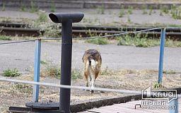Полиция Кривого Рога расследует жестокое обращение с животными возле депо Скоростного трамвая
