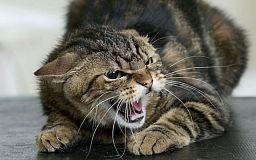 Що робити, якщо вас вкусила тварина, хвора на сказ