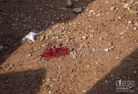 Криворожская школьница, которая пострадала во время «Гонок на выживание», идет на поправку