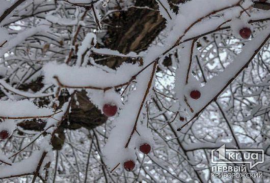 Какой будет погода 16 декабря и что говорят астрологи