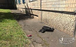 В Кривом Роге женщина выпала из окна многоэтажки и разбилась насмерть
