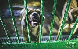 Наркотические препараты в криворожском Центре обращения с животными не используют, - заявление